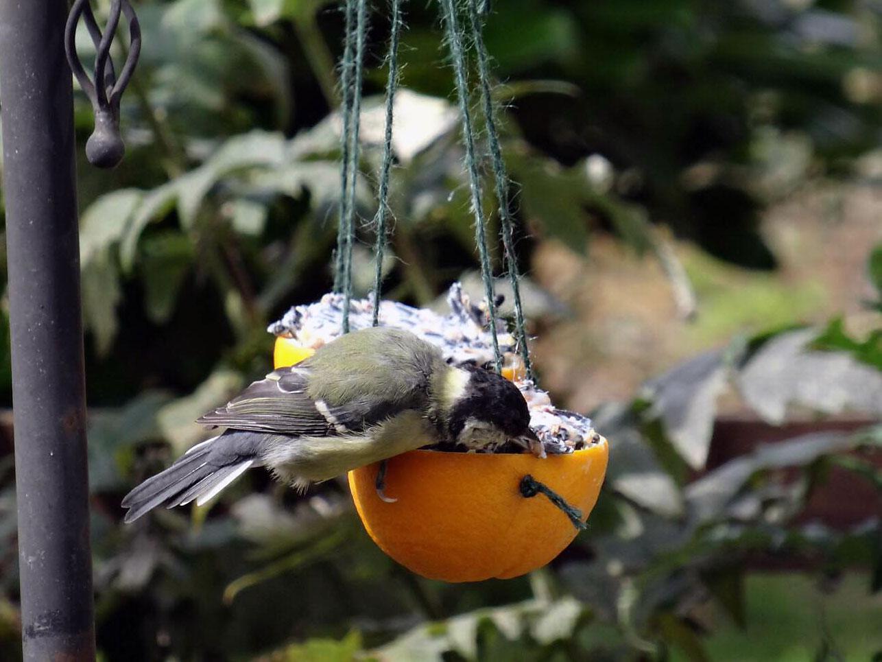 A bird eating bird cake