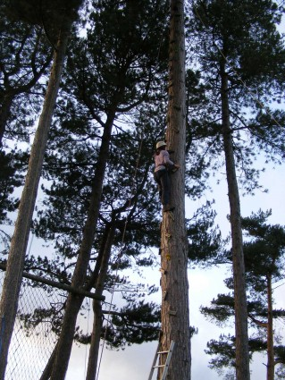 An adult climbing up the tree climb (high ropes) at Thornbridge Outdoors